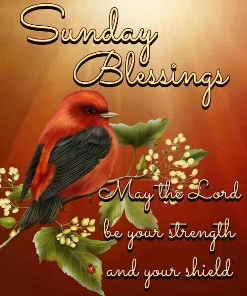 Sunday Blessings | Quotes | Pinterest