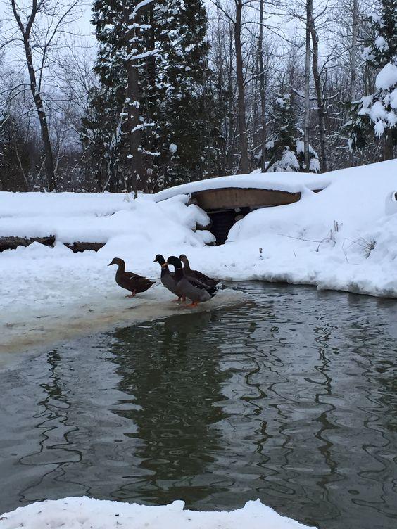 Winter Pond - 4