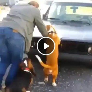 Cão para toda obra, quem tem cães nunca está sozinho