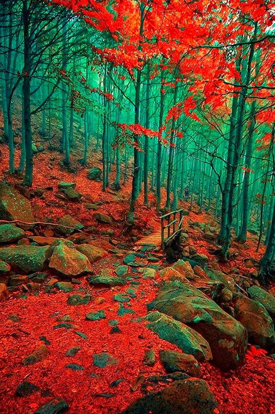 Autumn - Merca Michael Liguria İtaly