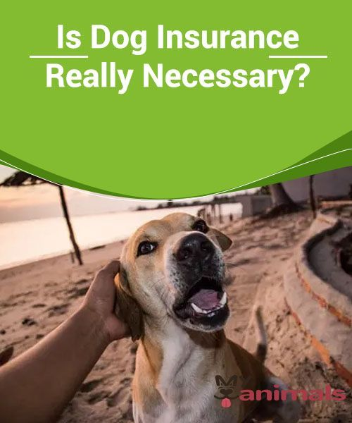 Is Dog Insurance Really Necessary Dog Insurance Dogs Animals