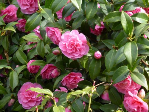 Pink Plants for Spring