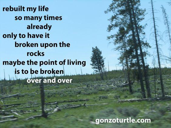 """Ron Vaught on Twitter: """"#gonzoturtle #life #art #photo #words #poetry https://t.co/lqovr3alVa"""""""