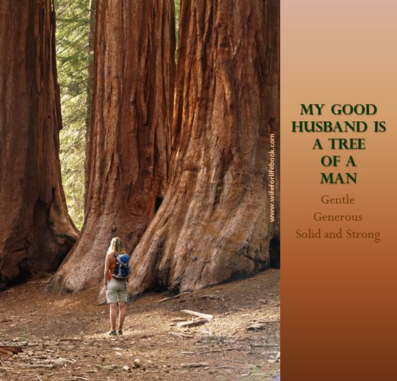 My good husband is a Tree of a Man. Gentle. Generous. Sold and Strong.  Learn more about helping your husband grown into a mature Tree of a Man at wifeforlifebook.com
