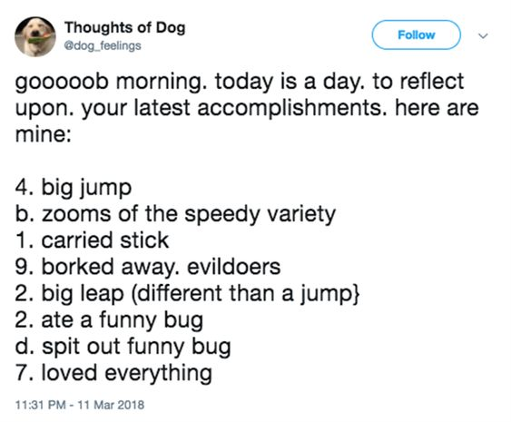 Thoughts Of Dog Is One Of The Funniest Twitter Pages Ever – 13 Pics