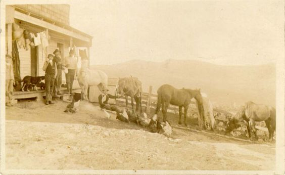 Image:Horses chickens dogs in Visitacion Valley nd AAC-1665.jpg