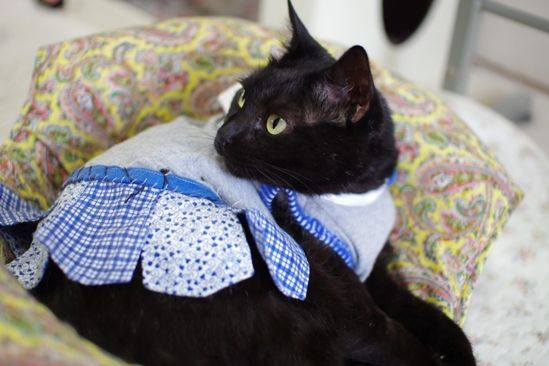里親さんブログ洋服に慣れて来たら穴も復活! - http://iyaiyahajimeru.jp/cat/archives/55117
