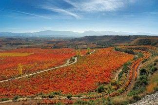 Camino de Santiago (La Rioja)