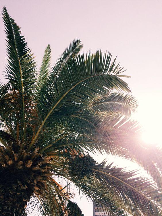 Palmtree+sun=happiness