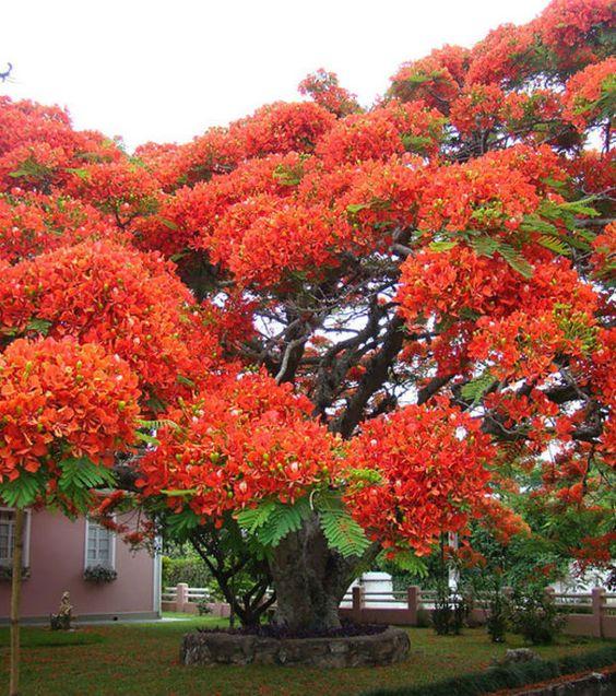 Hommages aux arbres 0176c9b578cfbad248cd8039c85700ff