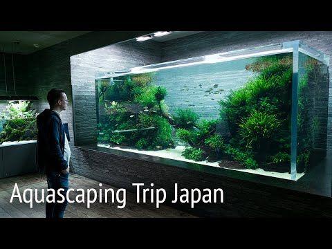 Ada Nature Aquarium Gallery Aquascape Timelapse Aquascaping Aqua Design Amano Hardscape Aquarium Forest Aquascape Plant Nature Aquarium Aquascape Takashi Amano
