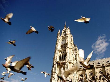 鳥と共にサン・ピエトロ大聖堂です。