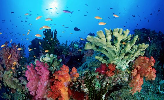 """017a0c310e87dae617df527d8ede0be9 BARRIERA CORALLINA: la lenta morte del """"capolavoro del mare"""""""
