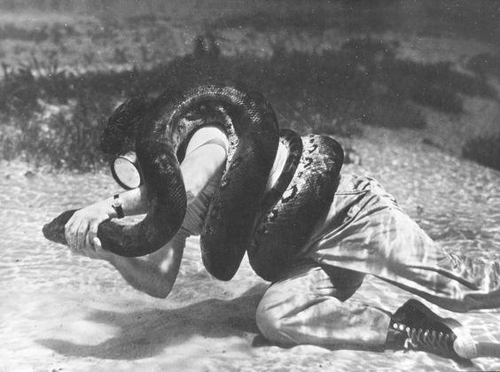 Anaconda Gay 58
