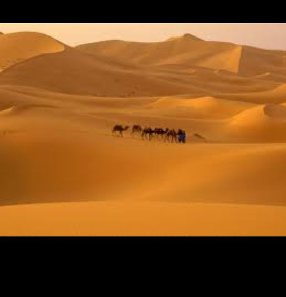 This is the Sahara desert located in Algeria, Chad, Egypt ...