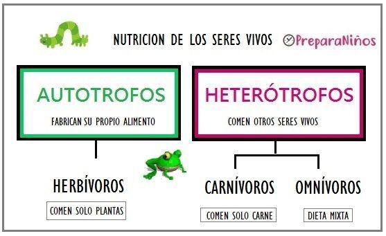 Nutricion De Los Seres Vivos Para Ninos Autotrofos Y Heterotrofos Clasificacion De Seres Vivos Cuadernos Interactivos De Ciencias
