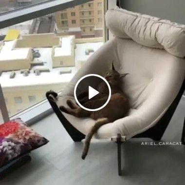 Essa cadeira agora é minha me deixe em paz