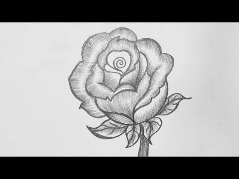 Pencil Drawing Rose Flower How To Draw Rose Pencil Drawing Easy Rose Pencil Drawing Youtube In 2020 Pencil Drawings Roses Drawing Pencil Drawings Easy