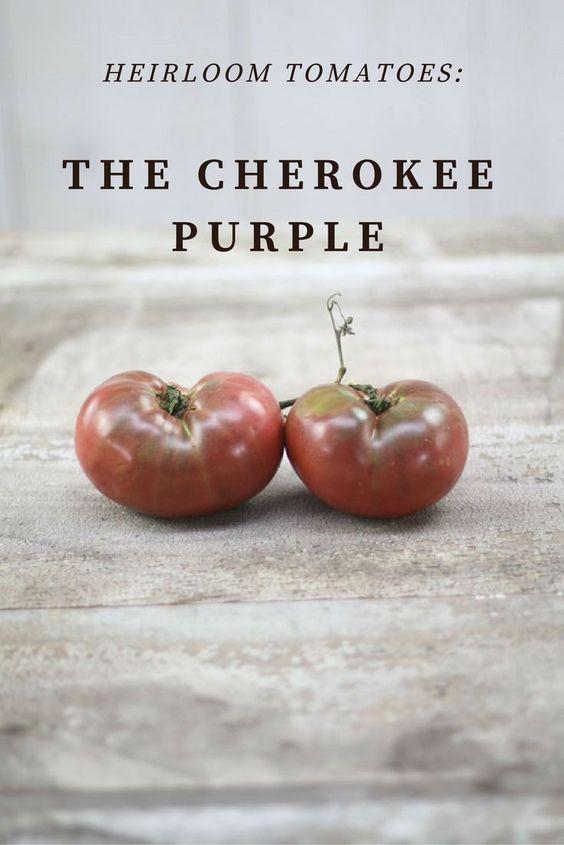 The Cherokee Purple Heirloom Tomato // Heirloom Gardener Magazine
