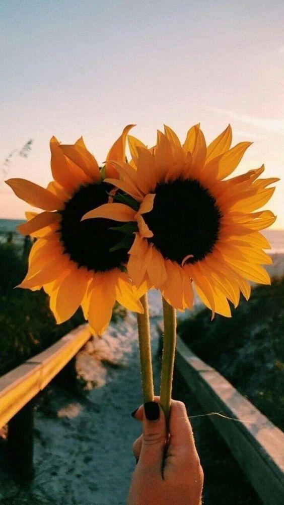 Pinterest Gracegorges Bloomin Sunflower Wallpaper Aesthetic Sunflower Wallpaper Aesthetic Wallpapers Sunflower Iphone Wallpaper