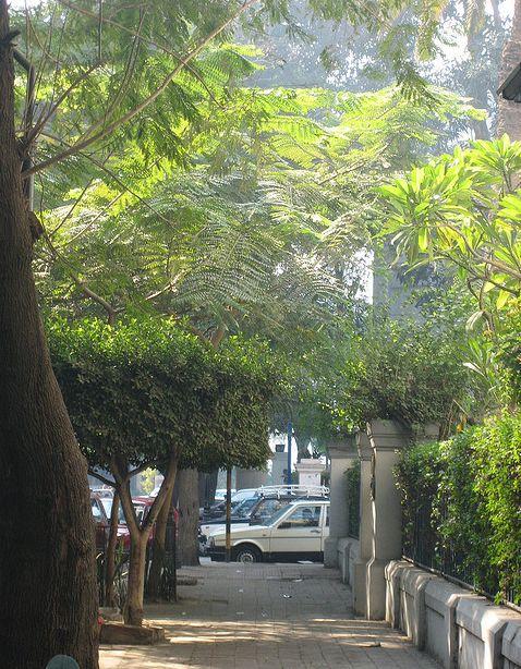 luv Zamalek
