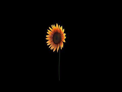Blender Tutorial Sunflower Youtube Blender Tutorial Tutorial Sunflower