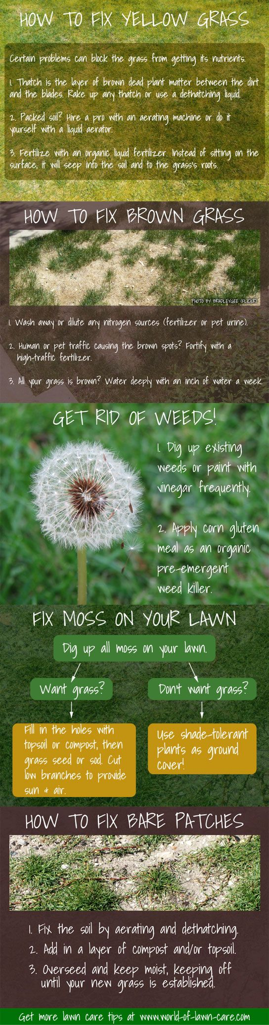 5 lawn repair fixes for yellowing grass, bare / brown patches, weeds, and moss.