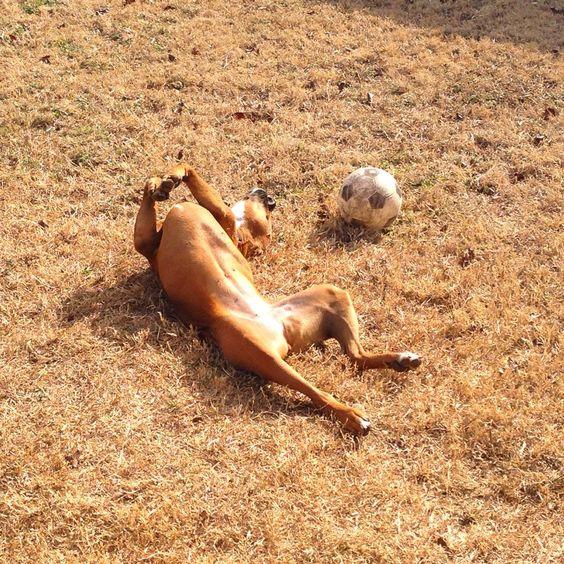 Molly enjoying some sun