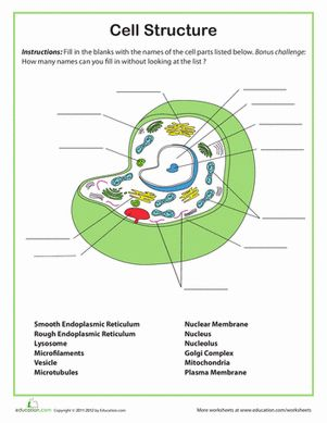 Printables Free Printable Science Worksheets For 7th Grade a well cell structure and biology on pinterest worksheet 7th grade