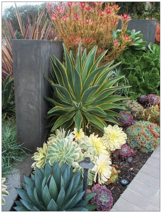 Contemporary design plants and succulents on pinterest for Plants for contemporary garden design