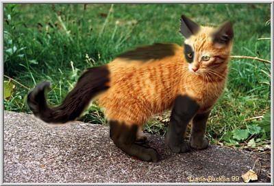 kitten with unusual orange black markings: