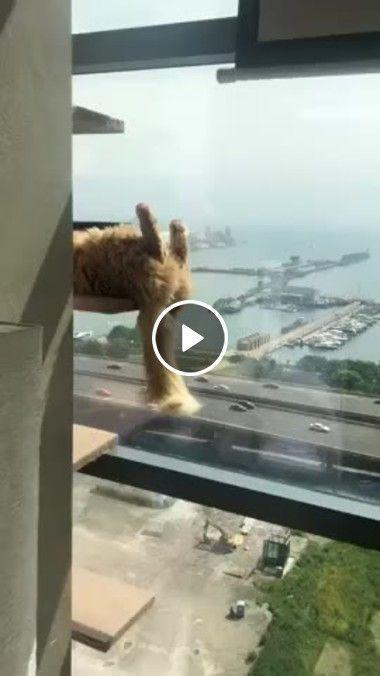 Gato louco em cima de preio dizendo que vai se matar