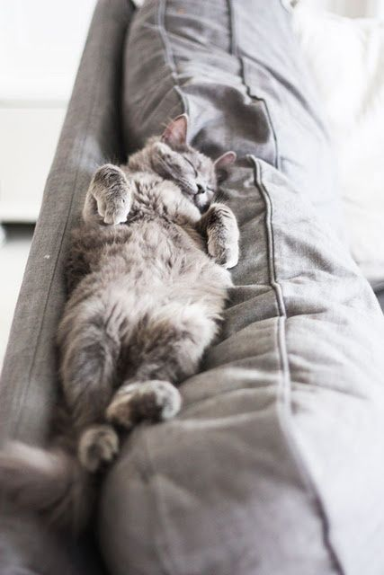 Fluffy cat asleep on back on grey sofa on Hello Lovely Studio