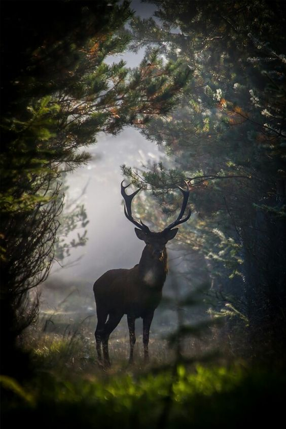 le prince de la forêt