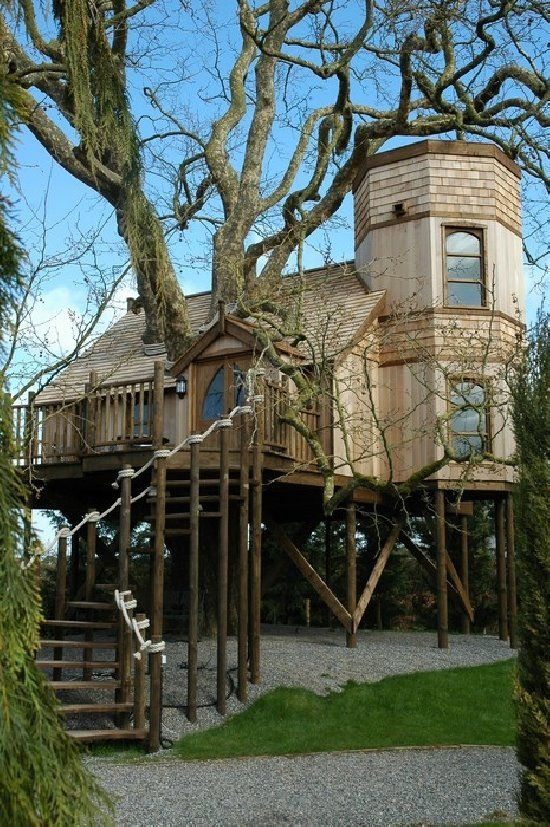 Let's build a tree house around a tree!