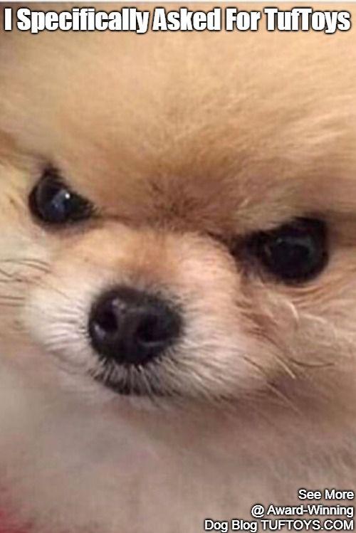 Funny Dog Memes Part 11 Funny Dog Memes Funny Dogs Dog Memes