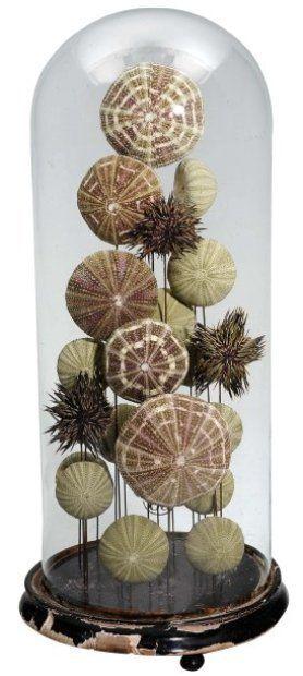 Paire de globes présentant des oursins de différentes variétés. photo courtesy Pierre Bergé & associés [Pair of globes with sea urchins of different varieties. Photo courtesy of Pierre Bergé & associés]