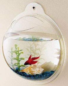 Wall hanging fish tank... hmmm...