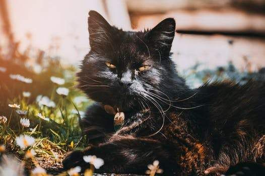 Black Cats Rule National Black Cat Day Cat Care Cat Behavior Cats
