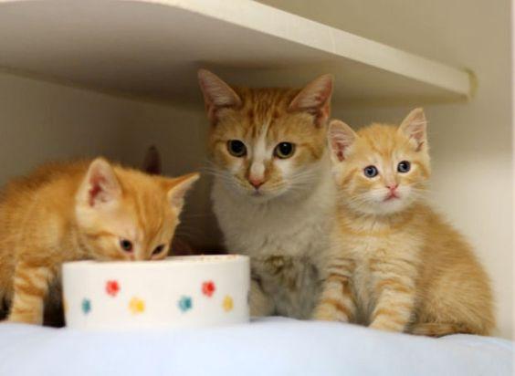 Cat , 4 kittens dumped in Humane Society donation bin