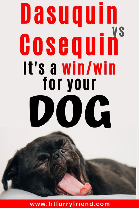 Joint pain, especially in larger breeds and overweight dogs, is a serious concern in aging dogs. Read about joint health for dogs Cosequin for dogs and Dasuquin for dogs. Joint health for dogs Cosequin vs Dasuquin comparison and review. #doghealth #doghealthtips #doghealthwellness #dogsupplements #olddog