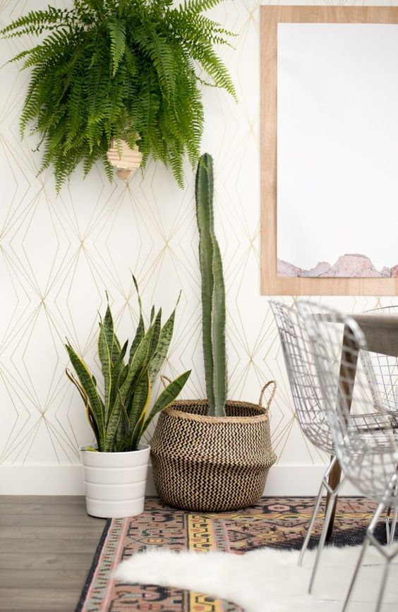 Mixing textures for the win! I especially love this fern + cactus combo. Who says house plants have to be boring?:
