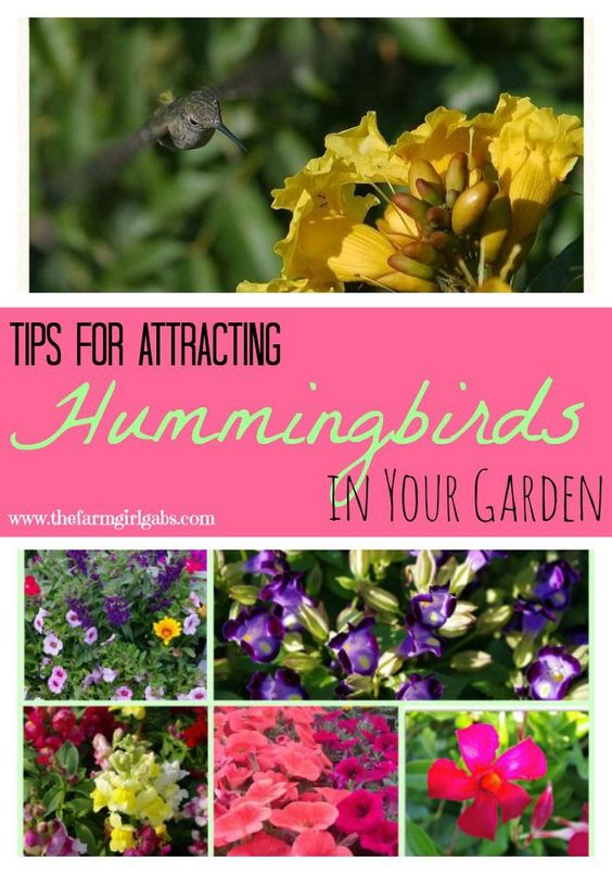 Tips for attracting hummingbirds in your garden from how for Best flowers to grow in california