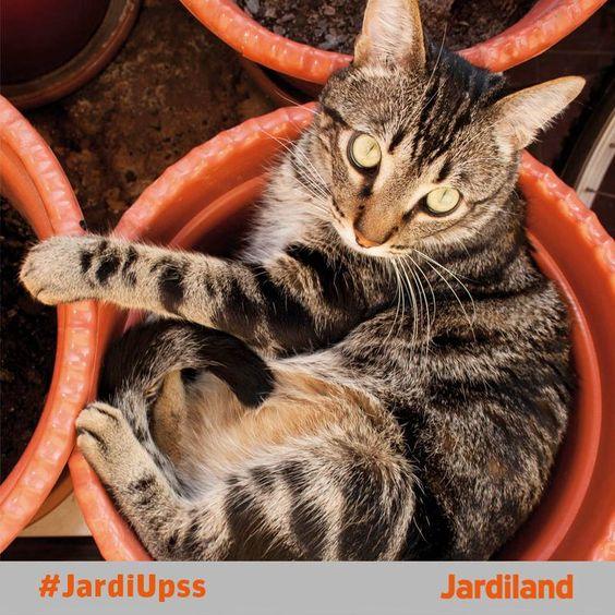 Upss... Cresceu-nos um gato no vaso!!