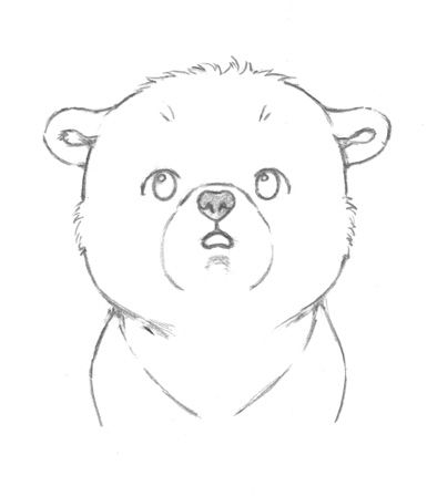 Baby Bear Drawing Bear Face Drawing