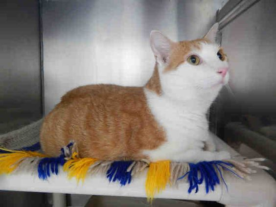 HENRY is available for adoption from @CUHumane #Urbana #Champaign #IL www.cuhumane.org PINNED 8/28/15 (CHAMPAIGN COUNTY HUMANE SOCIETY) Please click on the PET HARBOR link to see full BIO. Thanks.