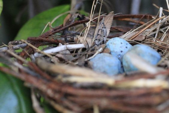 Handmade robins nest w/wooden carved eggs