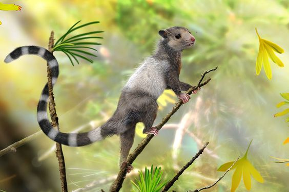 Fossils of prehistoric squirrels show mammals existed during the time of the dinosaurs