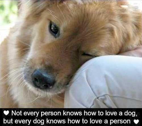 Dogs know how to love unconditionally.