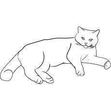 Top 30 Free Printable Cat Coloring Pages For Kids Warrior Cat Drawings Cat Coloring Page Cat Template
